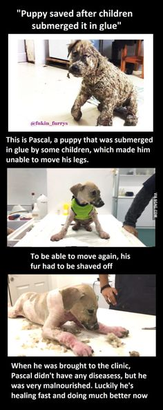 Who would do such a thing to an innocent animal??