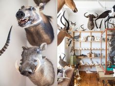 Helen Cathcart: Mandibles, Woodstock Foundry - Cape Town