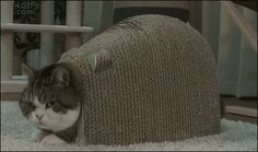 Funny cats - part 176 (40 pics + 10 gifs)   How to turn a cat 360 degrees.