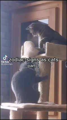Zodiac Sign Traits, Zodiac Signs Leo, Gemini Zodiac, Astrology Signs, Scorpio, Funny Vidos, Really Funny Memes, Funny Laugh, Funny Cats