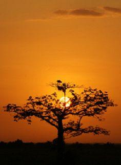 Hermoso instante en los llanos de Barinas cuando se va lentamente ocultando el sol en Venezuela