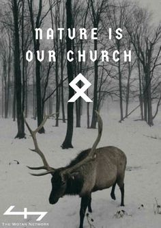 The Forest is a Healing Beautiful Church for Me.