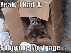 Funny raccoon found Narnia and some pizza crusts. Cute Raccoon, Racoon, Baby Raccoon, Narnia, Cute Baby Animals, Funny Animals, Animal Funnies, Animals Images, Wild Animals