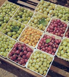Great Tips for Growing Gooseberries