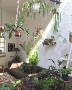 "3,287 Likes, 37 Comments - Indoor plants inspiration. (@plantsindecor) on Instagram: ""On the floor and on the wall via @jamies_jungle #plantsindecor #homedecor #whitehome #nordic…"""
