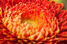 Mini gerbera Antique - a flower with a unique colour. It is not orange, not yellow and not brown... but what colour is it then! Do you know?