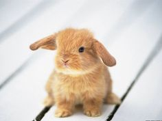 I am Baby Bunny! So warm, fluffy and cuddly! Everybody loves you and wants to snuggle with you while watching TV and eating carrots. You are a trusted and loyal friend who will help everybody, as long as it's not during snack time. |  Which Baby Animal Are You?