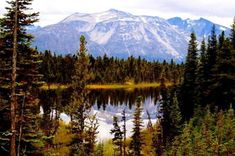 White Pass Rail & Yukon RR Excursions : Princess Cruises  #Princess Cruises and #Travel