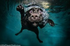 Dog Under Water - so cute