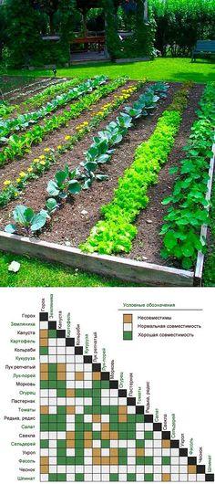 Совместимость и несовместимость растений | Огород и дача. | Postila
