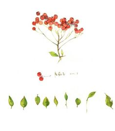 cherry Botanical Illustration, Watercolor Illustration, Watercolor Flowers, Watercolor Art, Cool Wallpaper, Nice Wallpapers, Doodle Art, Are You Happy, Doodles