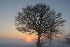Sunset with Snow and Tree