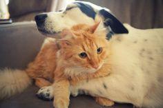 Psy i koty (część 3) - Widelec