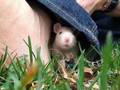 Pin by my little corner of the world on new | Pinterest by MyLittleCornerOfTheWorld Baby Animals, Funny Animals, Cute Animals, Small Animals, Hamsters, Rodents, Funny Animal Videos, Funny Animal Pictures, Animal Pics