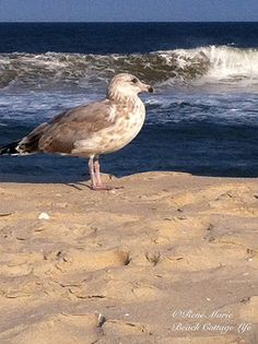 seagull & waves by René Marie | Beach Cottage Life | http://www.etsy.com/shop/ReneMariePhotography⚓
