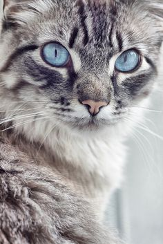 Wise Kitty ~