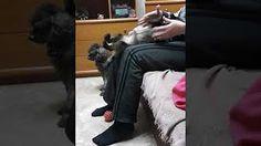 Η ΗΡΑ ΠΑΙΖΕΙ - YouTube Dogs, Youtube, Animals, Animales, Animaux, Pet Dogs, Doggies, Animal, Animais