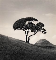 """Michael Kenna – Tree and Mountain, 2002 """"Each photo is a connection with human beings human. There is always, in each of my photos, a place where one can relax, breathe and think""""."""
