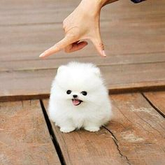 TINY and CUTE! Let your friends know about @cute @cute @cute @cute #animals #dog #animal