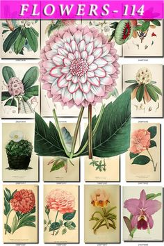 FLOWERS-114 Collection of 175 vintage images Rhododendron Cacti Dahlia Orchid botanical pictures High resolution digital download printable by ArtVintage1800s on Etsy