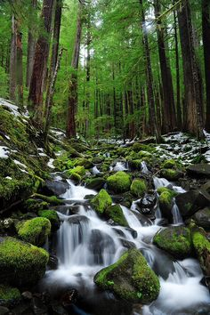 Lush creek. Washington