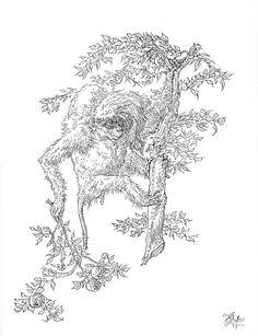 Peter Vos Illustration