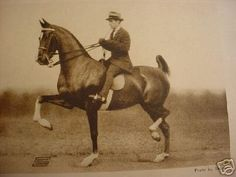 Moreland Maid, American Saddlebred mare was 3 gaited World's Grand Champion in 1937