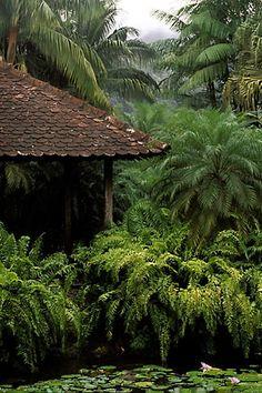 Martinique, Jardin de Balata, Gazebo, palms, ferns and water lilies