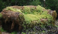 Moss Couch :  My Big Backyard, Memphis, TN.  (ed.  I love the interplay of colors with the different varieties)