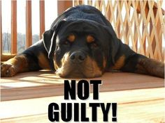 "Why does the media treat Rottweilers like criminals?     Why not show the responsible Rottweiler owners for once?    Click ""LIKE"" and ""REPIN"" to spread the word . . ."