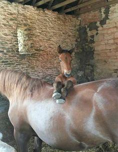 horse foal