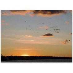 Trademark Fine Art Seagull Sunset Canvas Art by Kurt Shaffer, Size: 18 x 24, Multicolor