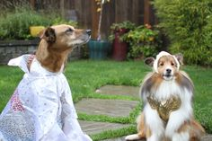 Pin for Later: 9 Unique Halloween Costume Ideas For You and Your Dog Rock Stars