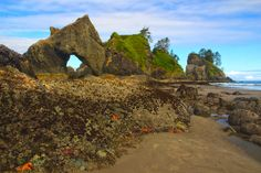 Arch and Starfish, Point of the Arches, Olympic NP