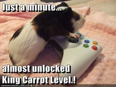 guinea pig gamer.. just like his owner Kenny!! :)