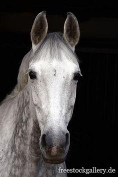 weißes Pferd - Pferdekopf