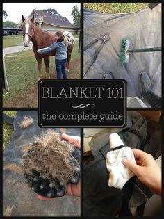 Blanket 101: All you need to know about choosing, caring for, cleaning, repairing and storing your horse's blankets! www.seehorsedesign.com
