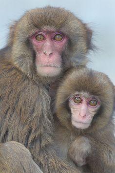 Sisters | Awaji Monkey Center #japan #hyougo