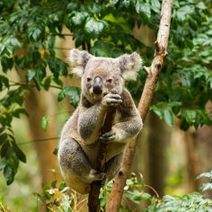 Hanging out for an adventure at Currumbin Wildlife Centre #thisisqueensland photo @ezradaviesphotography