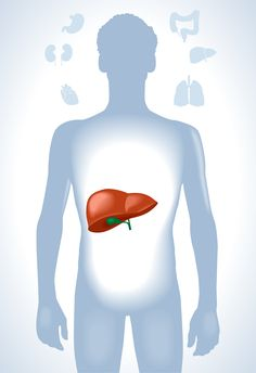 Onze lever heeft een belangrijke functie in de hormoonproductie en –huishouding, ontgifting en stofwisseling. Ondersteuning van onze –vaak overbelaste en vette- lever door mariadistel-extract zet z…