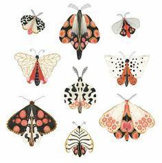 A few more moths. illustration LoginYou can . Butterfly Illustration, Illustration Art, Moth Drawing, Bugs Drawing, Posca Art, Butterfly Art, Butterflies, Insect Art, Botanical Art