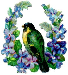 *The Graphics Fairy LLC*: Old Image - Brightly Colored Bird with Violets
