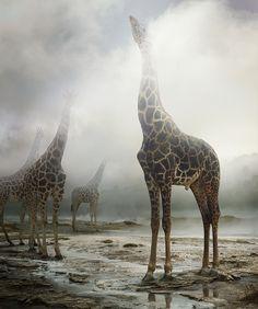 Animales como nunca había visto (FOTOS)