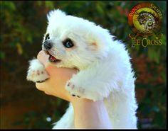 Handmade Poseable Baby Polar Bear by Wood-Splitter-Lee.deviantart.com on @DeviantArt