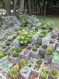 Plant Nursery Native Plants Trees To Botanical Gardens Shrubs Container
