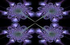Violeta Raw Fractal #fractals #fractalart #art