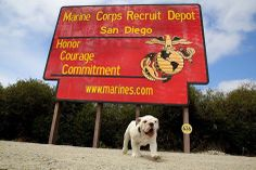 Marine Corps Recruit Depot San Diego is excited to introduce our newest mascot, a 10 week-old English bulldog, named Smedley Butler.   Recruit Smedley Butler, is named after Maj.Gen Smedley Butler, who at the time of his death was the most decorated Marine in Marine Corps history. Major General Butler was also the second commanding general of the Marine Corps Recuit Depot San Diego.