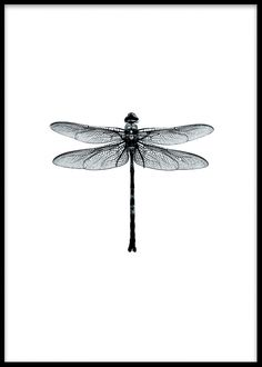 Poster with a black and white dragonfly, Swedish design.