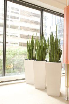 Hoffmandesigngroup Plants Horticulture Containers Philadelphia Interior Corporate
