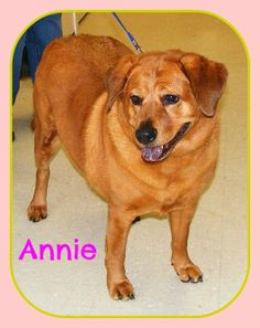 URGENT URGENT! SHELTER FULL! --ANNIE--Corgi • Adult • Female • Medium. Lawrence County Dog Shelter Ironton, OH. Available for a limited time from the Lawrence County Dog Pound, 1302 Adams Lane Ironton, OH 45638. Please call the dog warden at 740-533-1736 for further details. Unfortunately the pound does not have long distance calling so please call back if we do not return your call. The pound is open Monday-Friday, 10-4, except holidays. The adoption fee is $30 for Dogs and puppies.